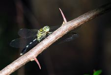 Free Green Dragonfly Royalty Free Stock Photo - 6546275