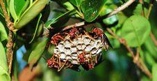 Free Wasps Royalty Free Stock Image - 6546306