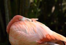 Free Flamingo Stock Photos - 6546763