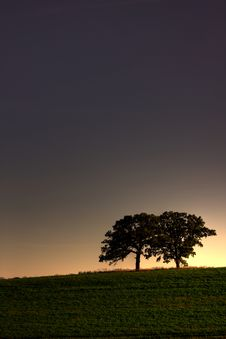 Free Trees At Dusk Stock Photo - 6546850