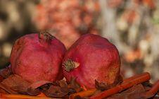 Free Pomegranates Royalty Free Stock Photography - 6546997