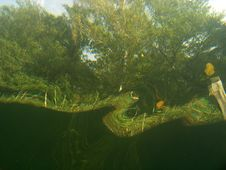 Under Water View Of Trees Stock Photos