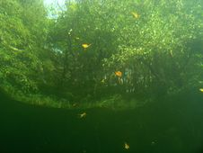Under Water View Of Trees Stock Image