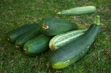 Free Courgettes Stock Photos - 6547893