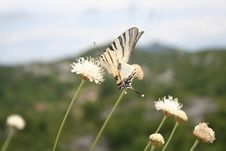 Free Butterfly 3 Stock Photos - 6548553