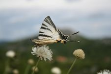 Free Butterfly 2 Royalty Free Stock Image - 6548586