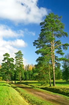 Free Pine Trees At The Enter To The Park Stock Photo - 6548740