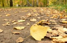 Footpath Filled Up By Yellow Leaves Stock Image