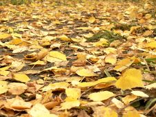 Footpath Filled Up By Yellow Leaves Stock Photo