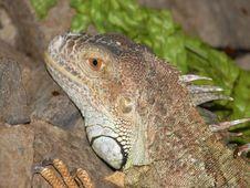 Free Dragon Stock Photo - 6549510