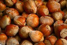 Free Hazelnuts Royalty Free Stock Images - 6549829