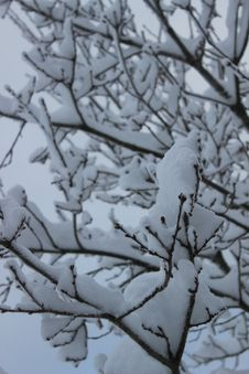 Free Snow Covered Twigs In Winter Stock Photography - 65436992