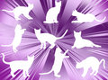 Free Cats Silhouettes Royalty Free Stock Photography - 6552277