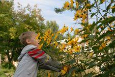 Free Boy Frightened Bumblebee Royalty Free Stock Photos - 6551648
