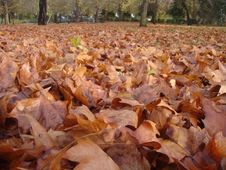 Leaves In Autumn Stock Photography