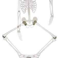 Bottom Part Of Skeleton Isolated On White Stock Image