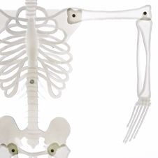 Free Detail Of Skeleton With Arm Isolated Stock Photo - 6552100