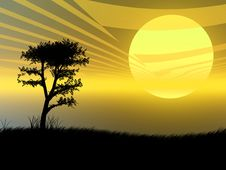 Free Tree In The Sunset Royalty Free Stock Image - 6552276
