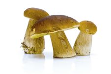 Free Boletus Edulis Stock Photography - 6552452
