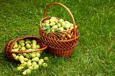 Free Rich Harvest Stock Photos - 6552713