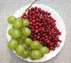 The Autumn Still Life Royalty Free Stock Image