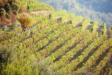 Free Vineyards Stock Photography - 6553872