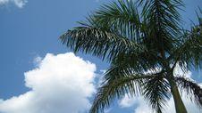 Free Palm Tree Royalty Free Stock Photo - 6555185