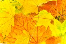Free Many Colorful Autumnal Leaves In The Park Stock Photography - 6556252