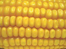 Free Corn On The Cobb Stock Image - 6557761