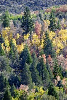 Free Forrest Of Trees In Fall Stock Photo - 6557770