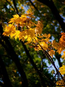 Free Autumn Leaves Stock Photos - 6558613