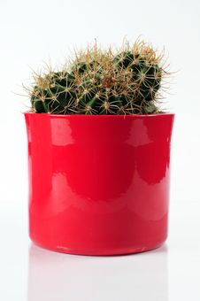 Free Cactus Royalty Free Stock Images - 6559379