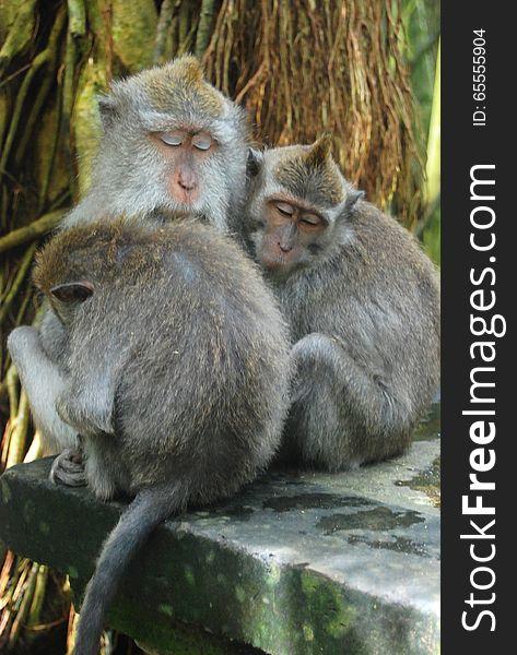 Monkeys hugging and sleeping together