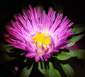 Free Impressive Colorful Flower In Macro View Stock Photography - 65560032