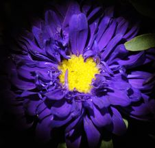 Free Impressive Colorful Flower In Macro View Royalty Free Stock Photography - 65560027
