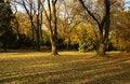 Free Autumn Park Royalty Free Stock Photography - 6560497