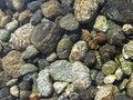 Free River Stones Stock Image - 6565551