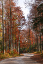 Free Forest In Autumn Stock Images - 6566064