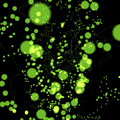 Free Bright Green Circles Background Royalty Free Stock Images - 6567209