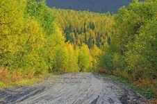 Free Autumn Road In Forest. Royalty Free Stock Photography - 6560137