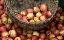 Free Apples Stock Image - 6560231