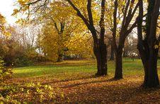 Free Autumn Park Stock Image - 6560391
