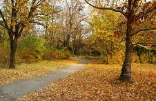 Free Autumn Park Royalty Free Stock Photo - 6560435