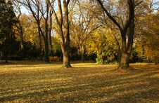 Free Autumn Park Royalty Free Stock Photography - 6560497