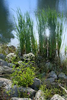 Free Pond Edge Royalty Free Stock Image - 6561176