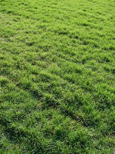 Free Grass Background Royalty Free Stock Image - 6561276
