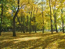 Free Autumn Park With Maples Royalty Free Stock Image - 6561706