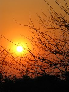 Free African Sunset Through Trees Royalty Free Stock Images - 6561839