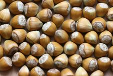Free Nuts Stock Photo - 6563620