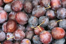 Free Violet Plums Stock Photo - 6563660